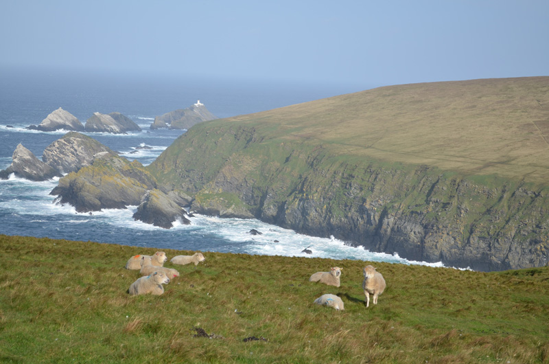 Hermaness Nature Reserve, Unst, Shetland Islands