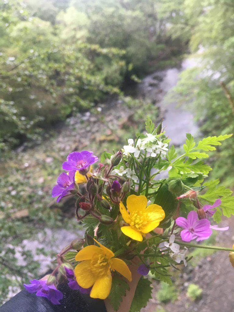 Wild flowers Keswick