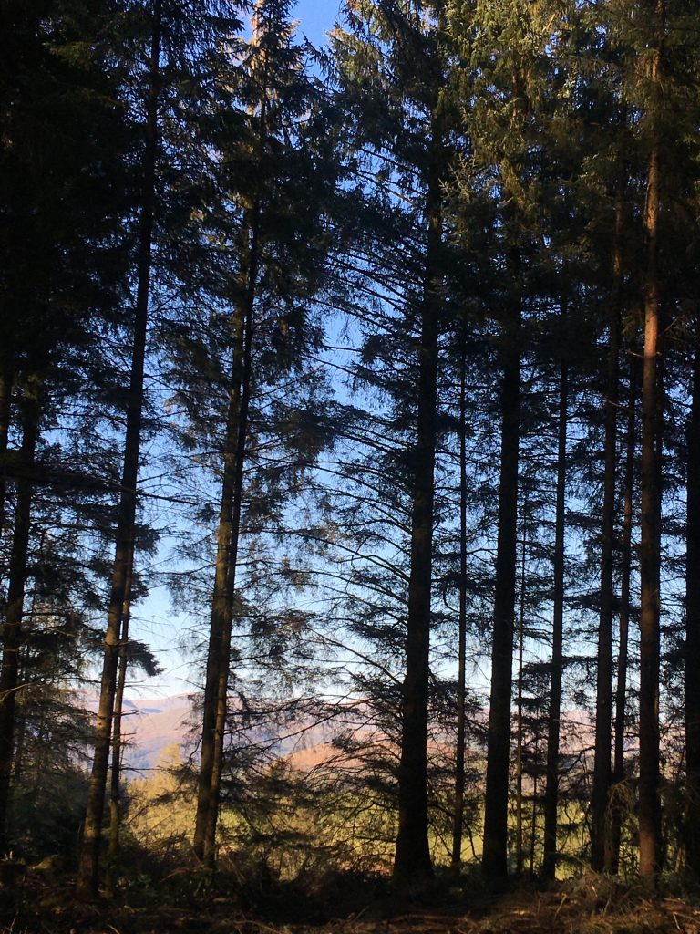 Grizedale Forest Lake District