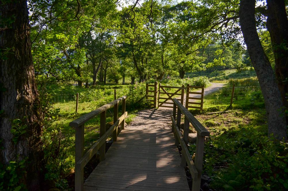 Glencoyne Wood on Ullswater Way
