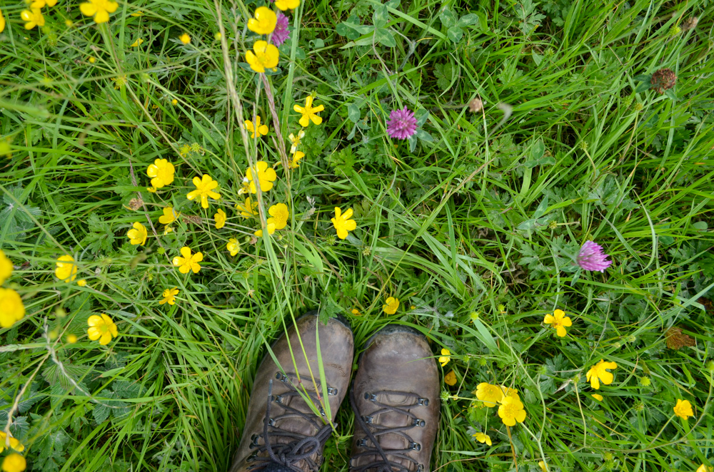 Buttercups on the Ullswater Way